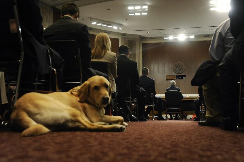 Service Dog.Bloomberg.jpg