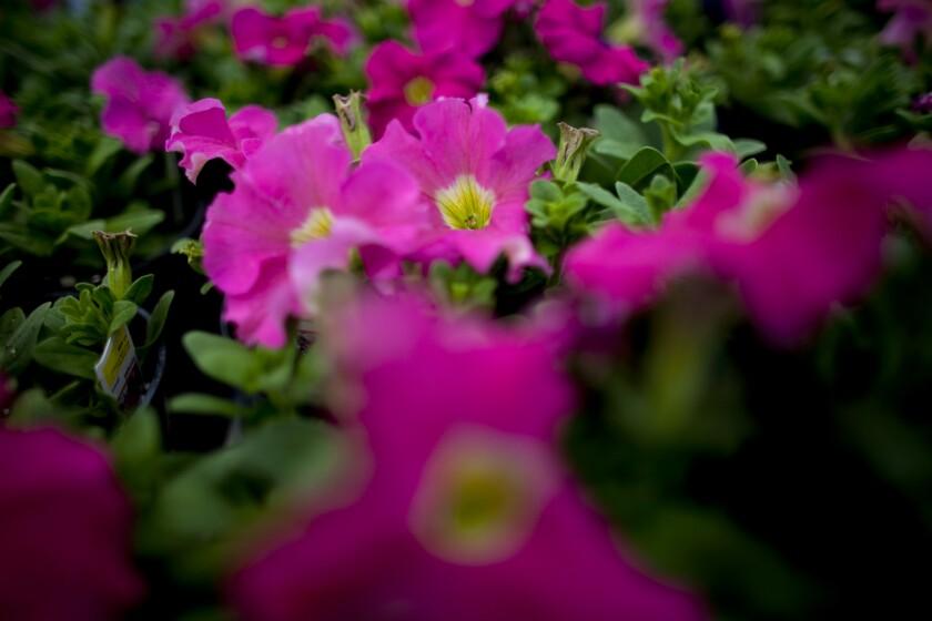 FlowerGarden.jpg