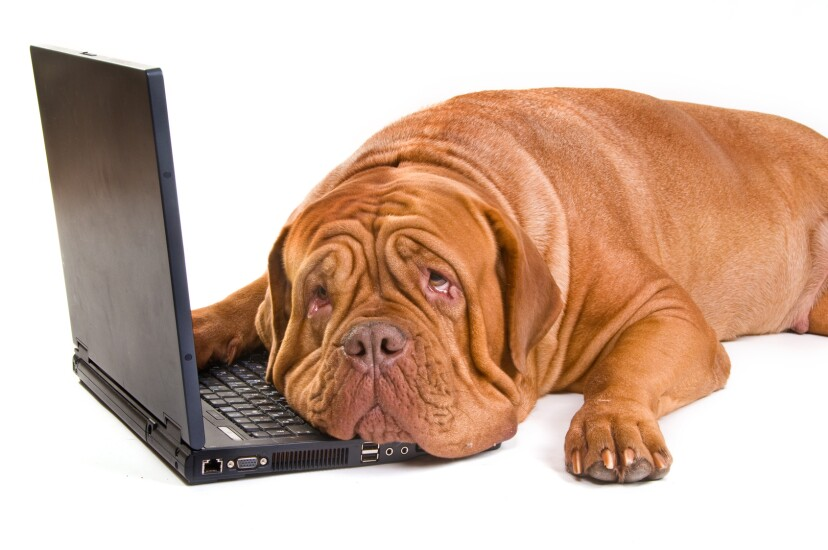 17. Bring your dog to work.jpg