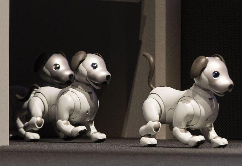Sony robot dogs.jpg
