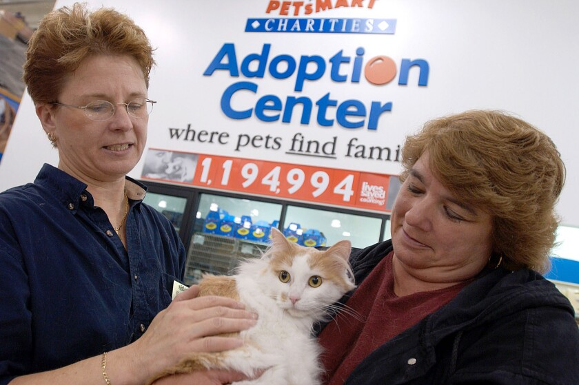 pet-cat-adoption-event