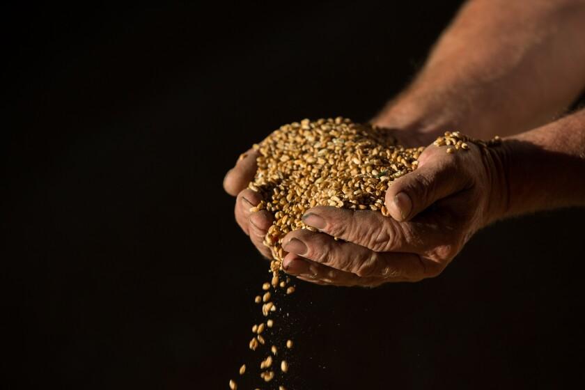 farming-seeds-bloomberg-iag-2016