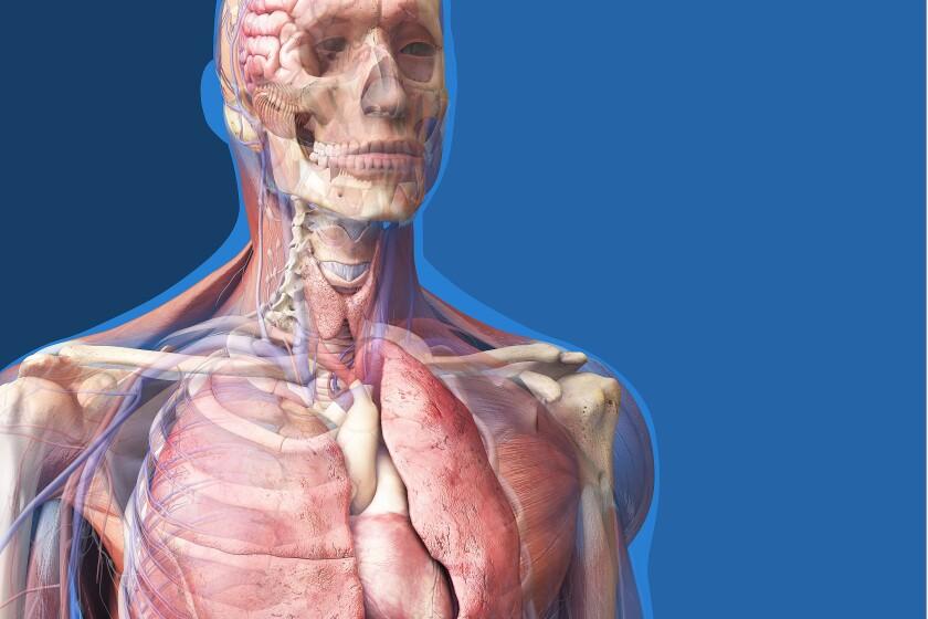 zygote-anatomy-CROP.jpg