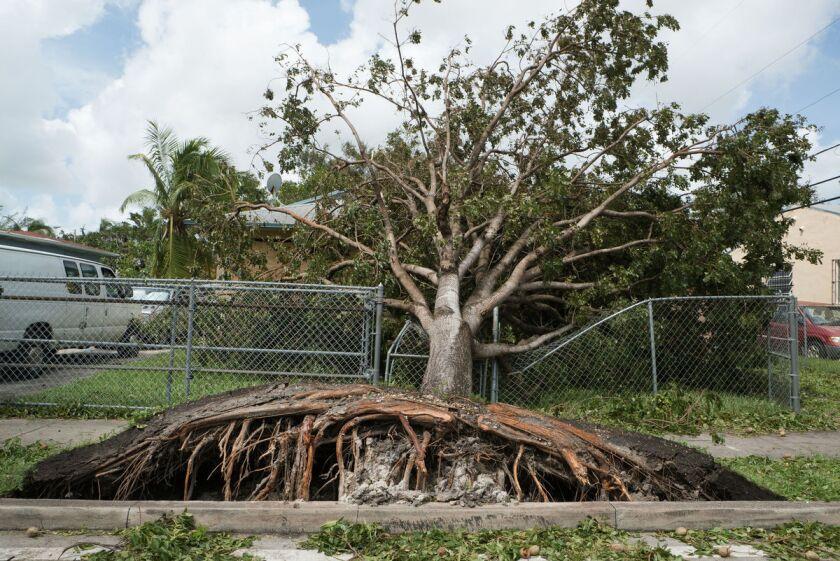 Irma four.jpg